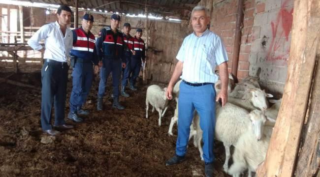Ahmetli'de Çalınan Koyunları Jandarma Buldu