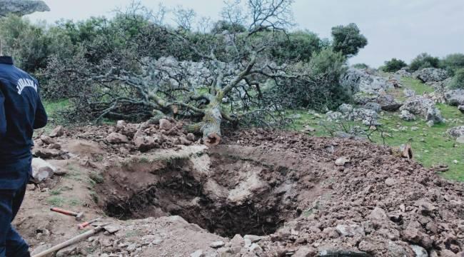 Manisa'da Define Aramak İçin Meşe Ağacını Söken 4 Kişi Gözaltına Alındı