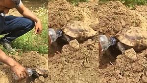 Turgutlu'da bir Çiftçi Susuzluktan Bitkin Düşen Kaplumbağaya Elleriyle Su İçirdi (Video Haber)