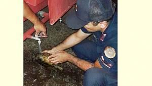 Manisa'da Orman Yangınının İçinde Kalan Kaplumbağayı Jandarma Kurtardı